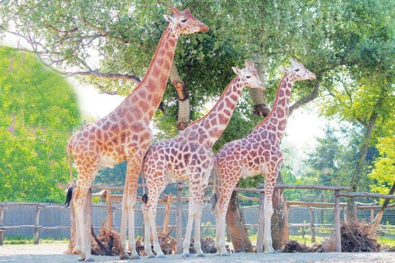 <a href='http://hellogyor.hu/de/aktive_freizeit/xantus-janos-zoo/'>Xantus János Zoo</a>